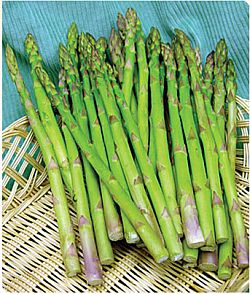 Asparagus - 'Jersey Giant' from Burpee