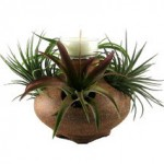 Air plants from Air Plant Supply Co.