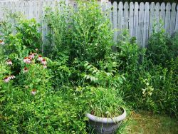perennial before with thistles and more