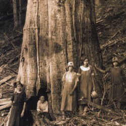 American Chestnut with people