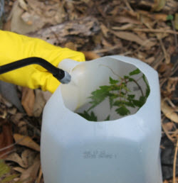 milk jug to spray weed