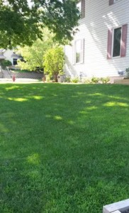 July rains created a green lawn.