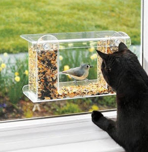 window feeder 2