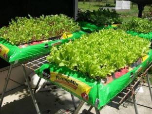 gardening in a bag