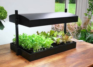 2016 garden trends garden bite for Indoor gardening trends