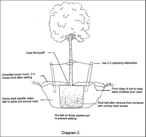 planting trees diagram