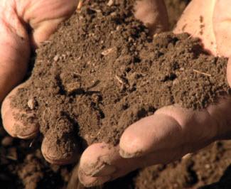 soil hands 2
