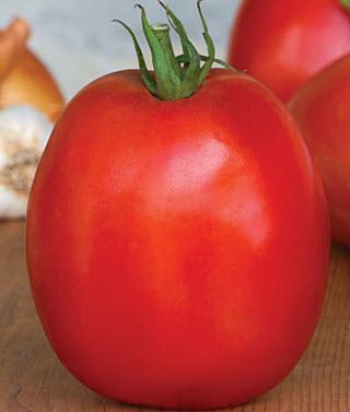 Tomato 'Super Sauce'