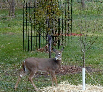 deer busted