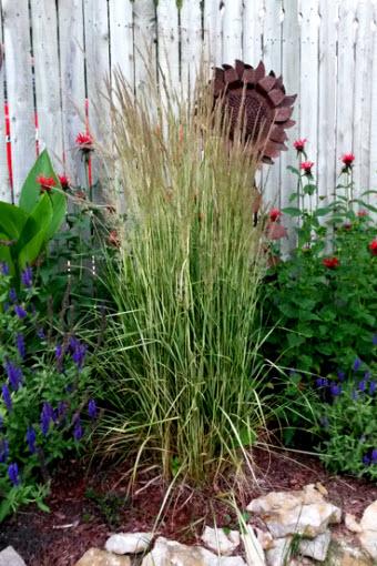Grass 'Karl Forrester'