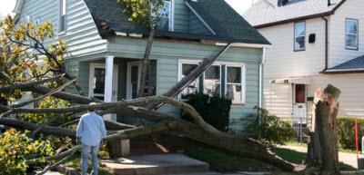 storm damaged garden