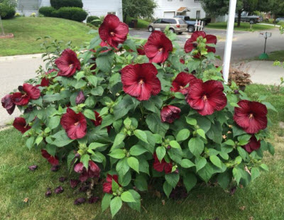 Perennials To Plant In The Fall Garden Bite