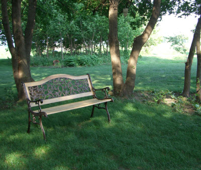 lawn with bench 2