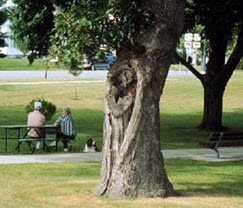 tree with hazard
