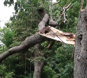 wind damaged tree on power line