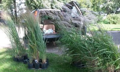 terry-grasses-car