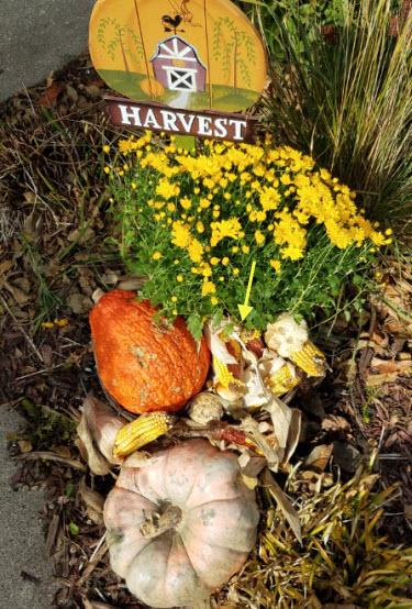 harvest-2016-fall
