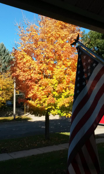 tree-and-flag