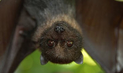 bat-upside-down