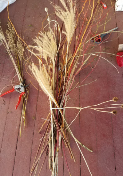 grasses-for-indoors-too