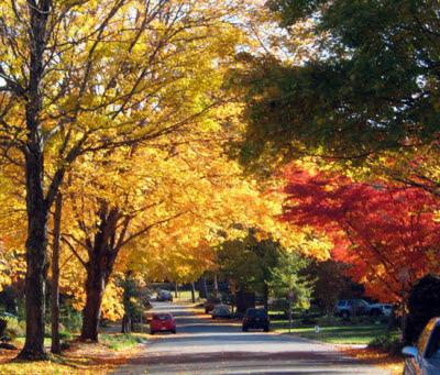 tree-lined-neighborhood-in-fall