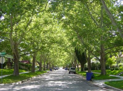 tree-lined-neighborhood