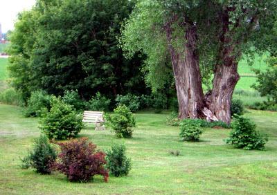 2008-shrubs