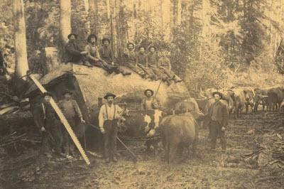 american-chesnut-loggers