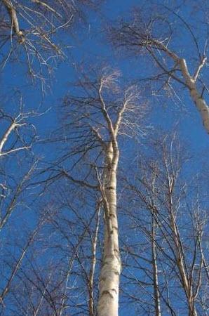 'Parkland Pillar' in Winter