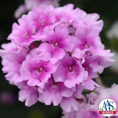 EnduraScape Pink bicolor